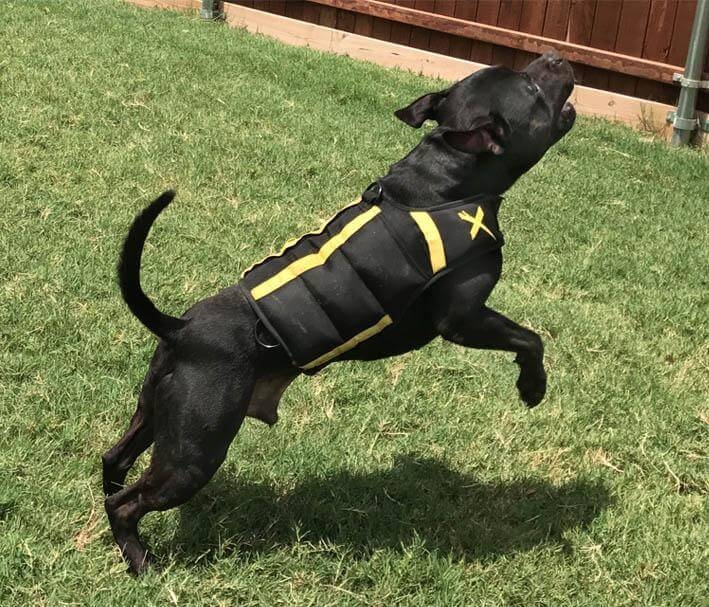 weighted vest for dogs